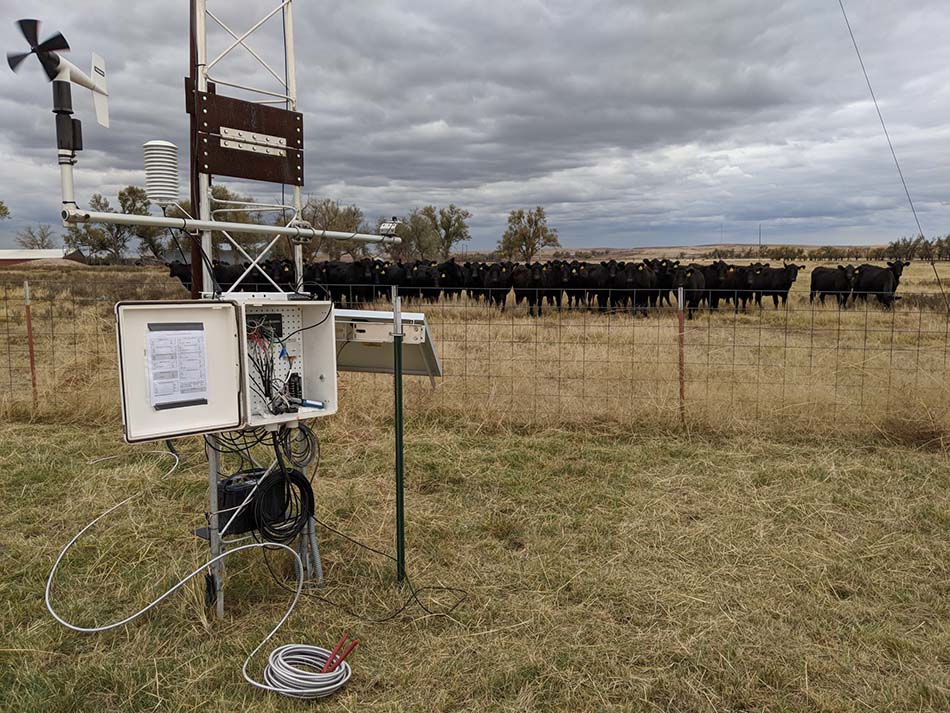 weather station overlooked by livestock